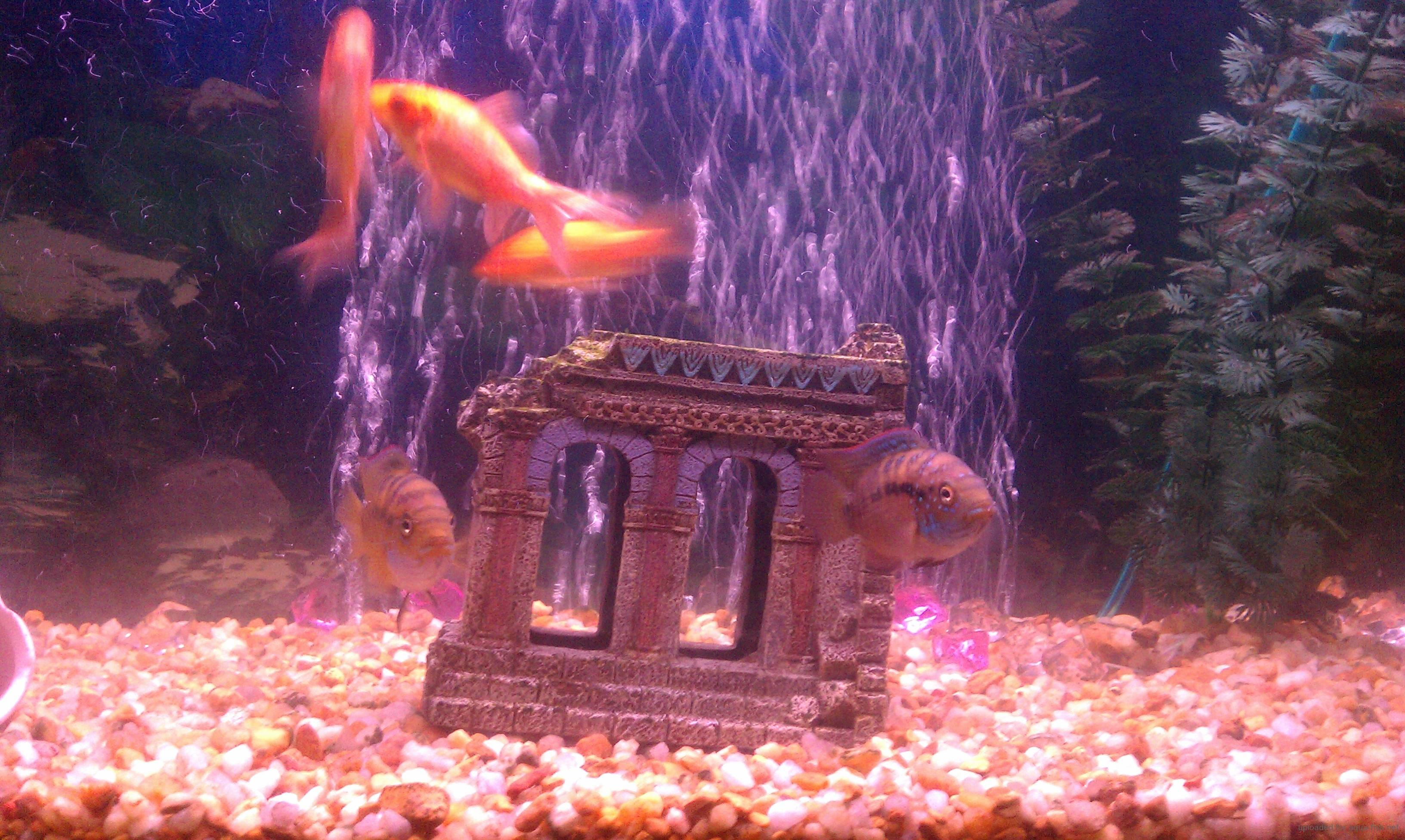 Fish tank cloudy even after cleaning for Cloudy water fish tank