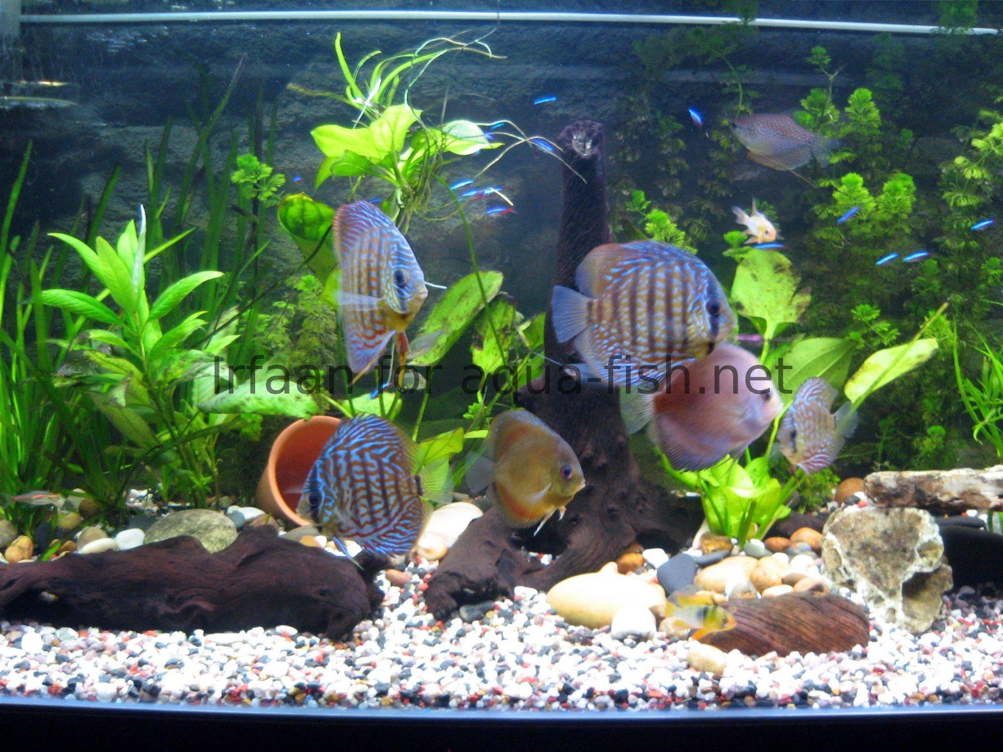 Aquarium Design Examples