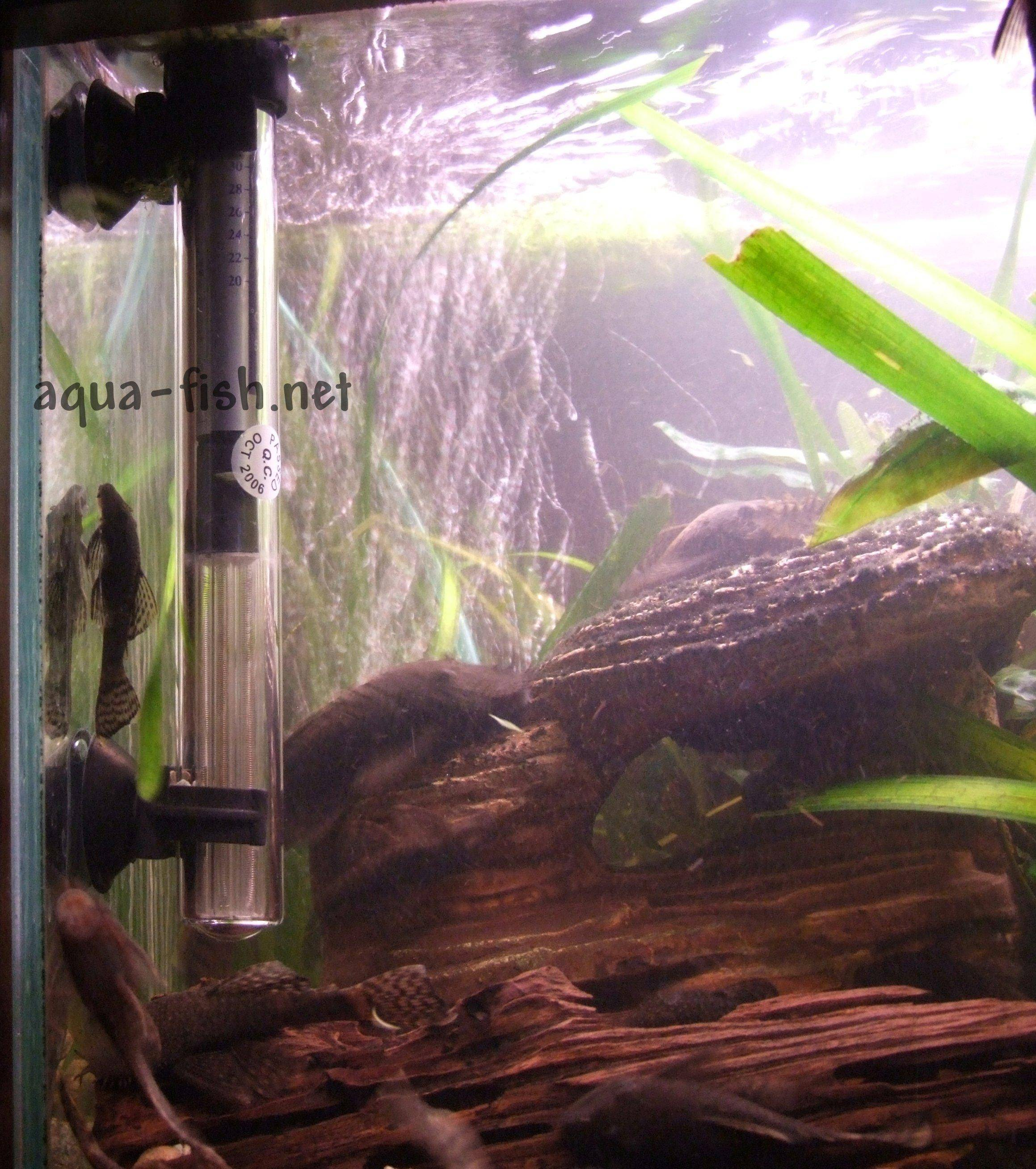 Aquarium water heaters provide heating to the fish tank to maintain good water temperatures for the fish. Learn tips for buying a the right tropical aquarium fish tank
