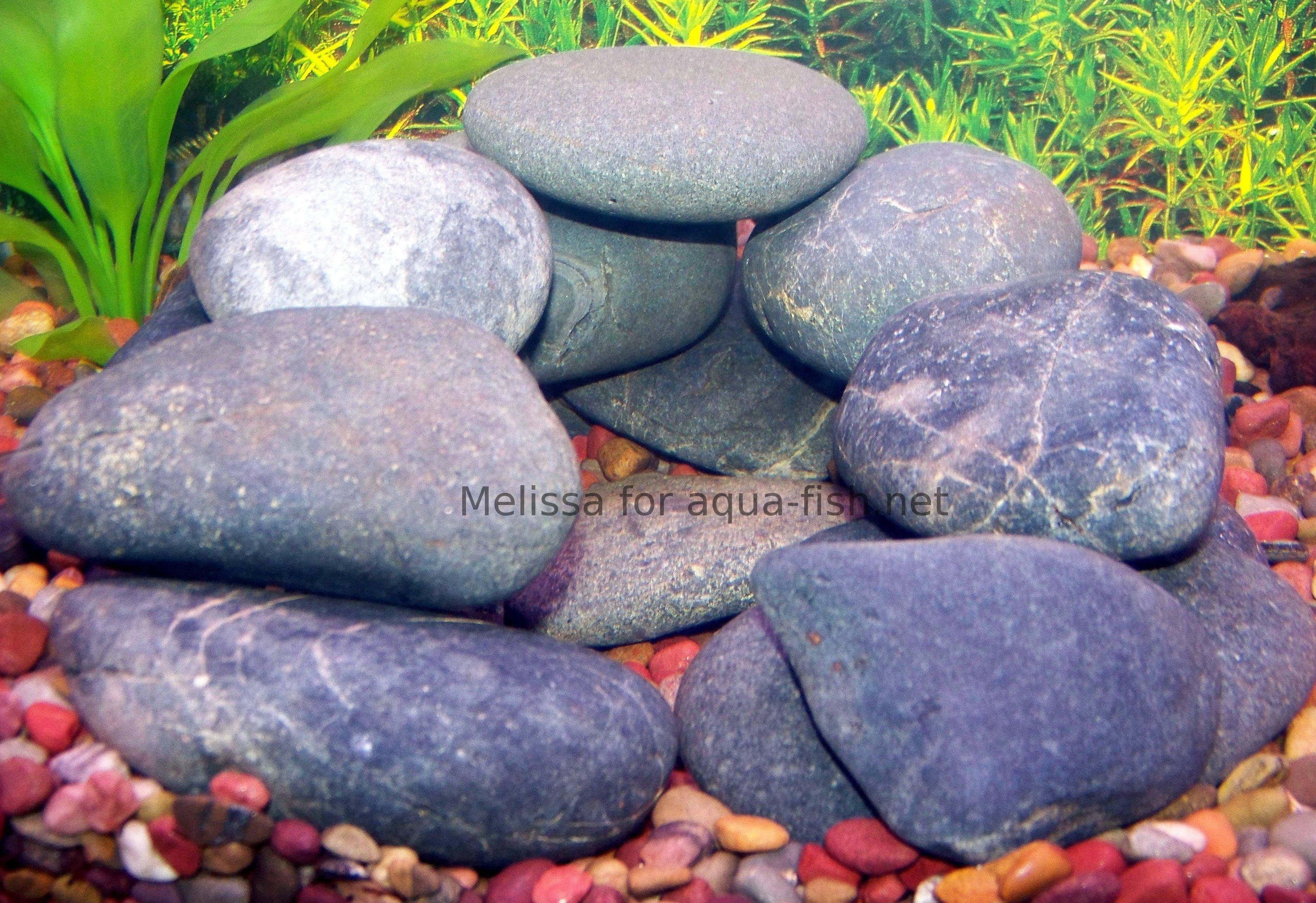 Aquarium fish in rock cave homedesignpictures for Fish aquarium rocks