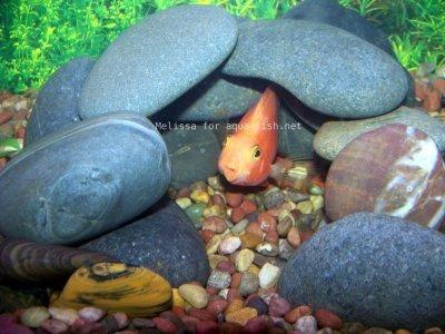 Kamene v akváriu, 1