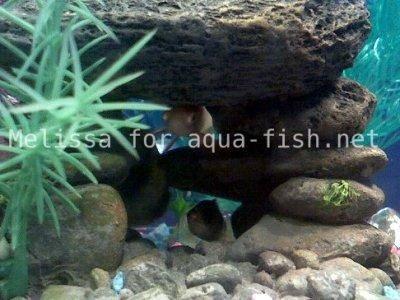 Kamene v akváriu, 2