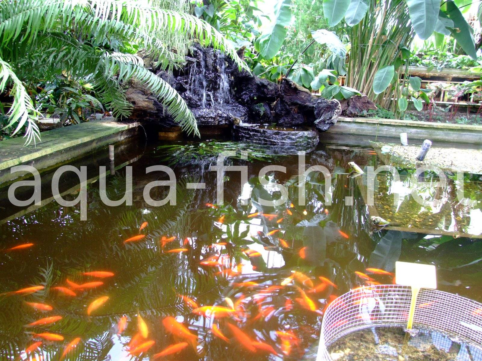 What S Wrong With My Garden Pond Water: FAQ And Answers About Running A Garden Fish Pond