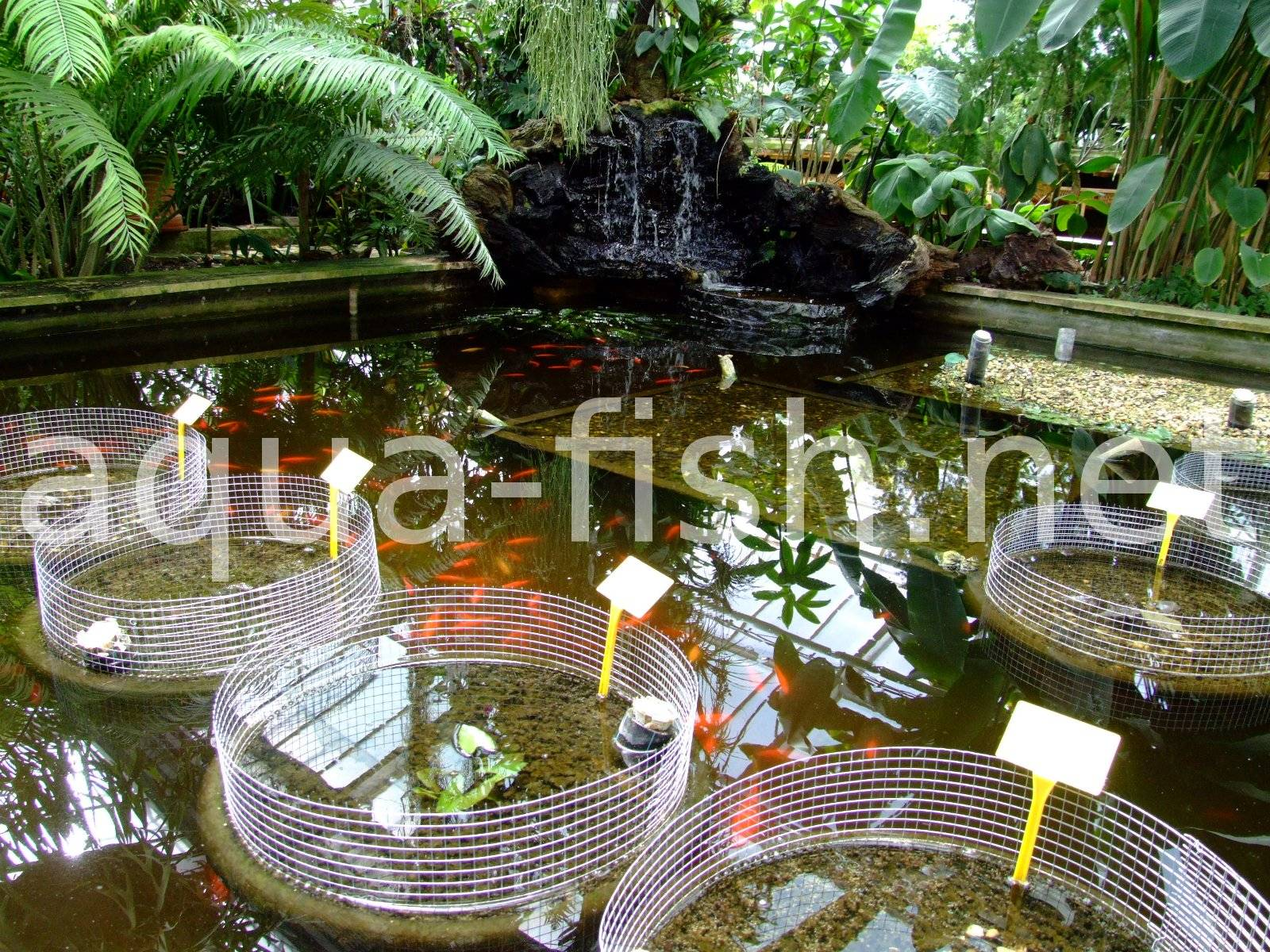 Ideas on building fish ponds along with images and discussion for Outdoor fish pond setup