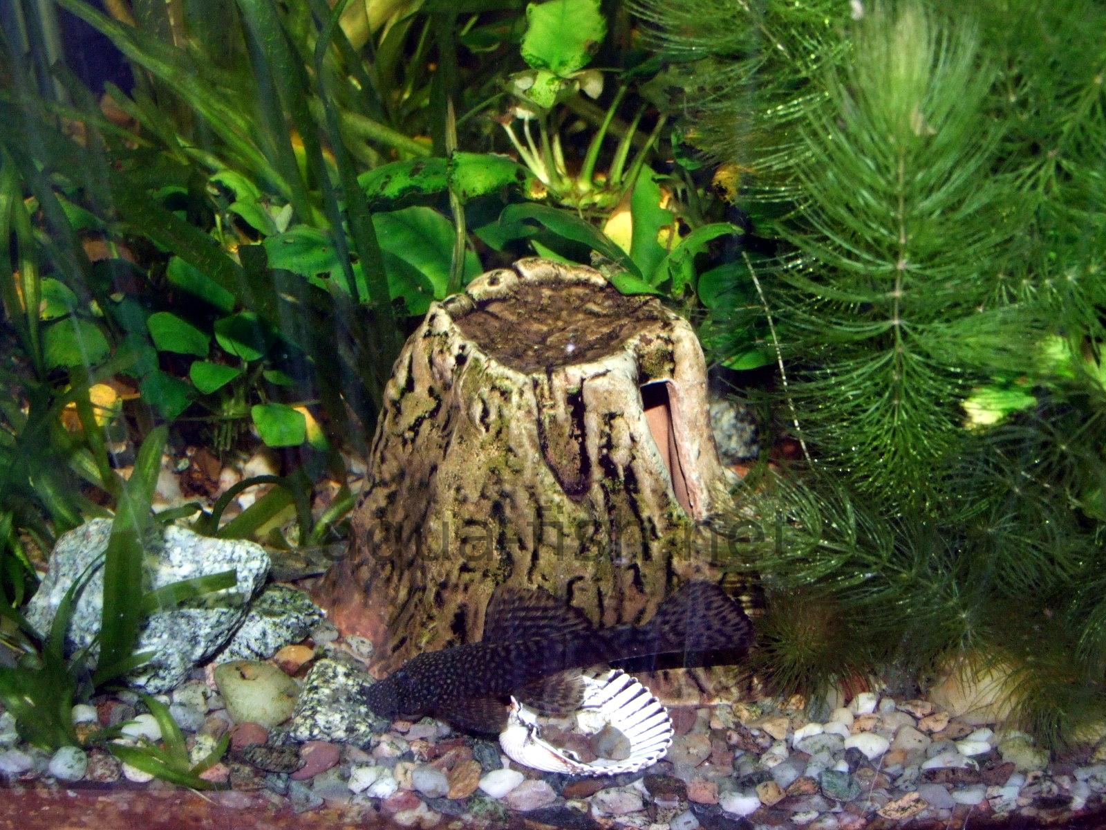 Decoration aquarium for Achat deco aquarium