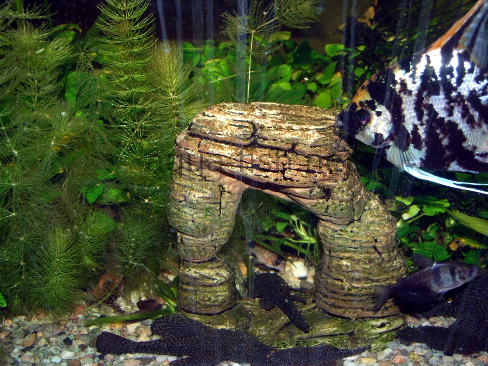Aquarium Decoration Tips And Forum