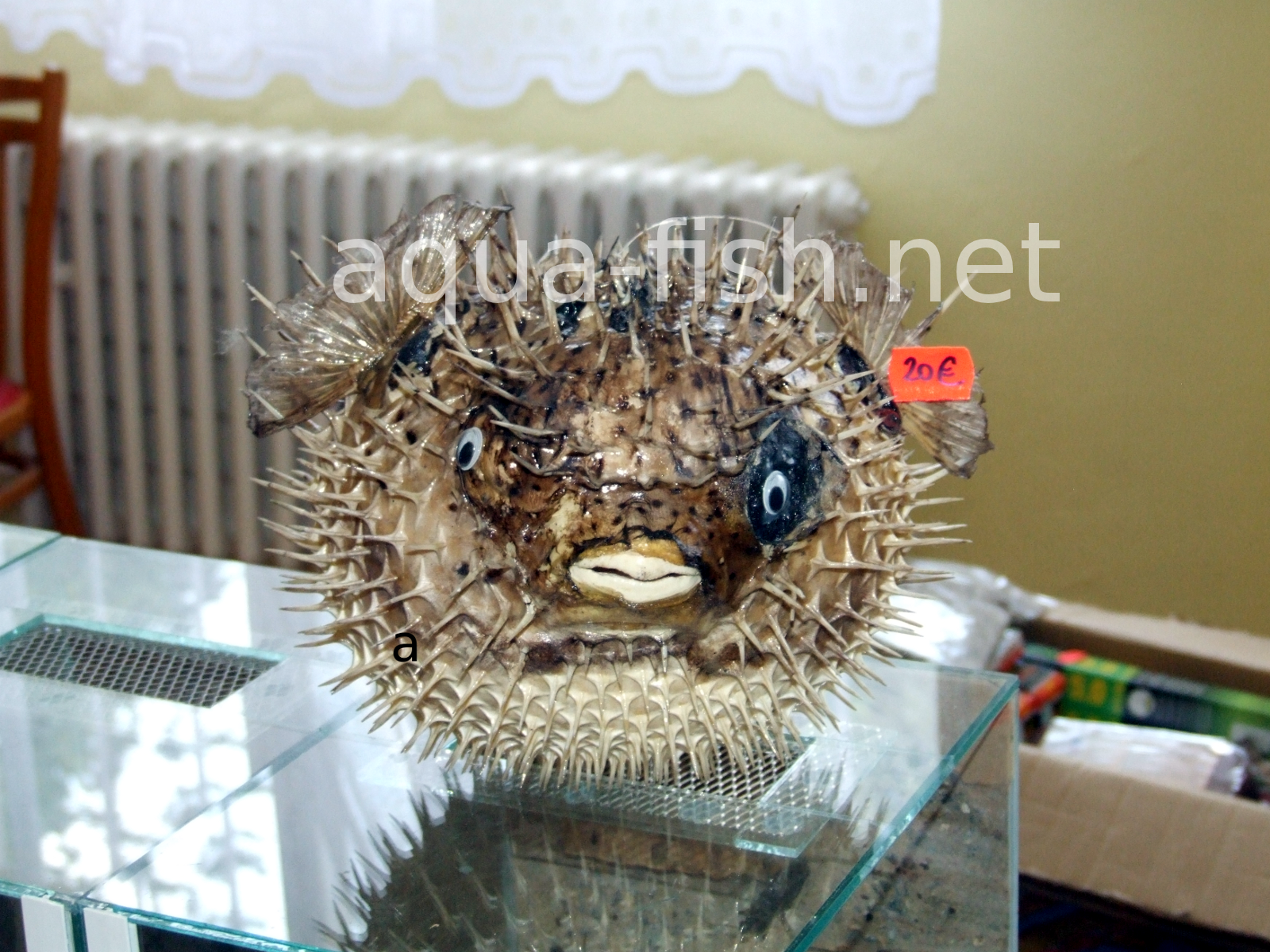 how to take care of a puffer fish