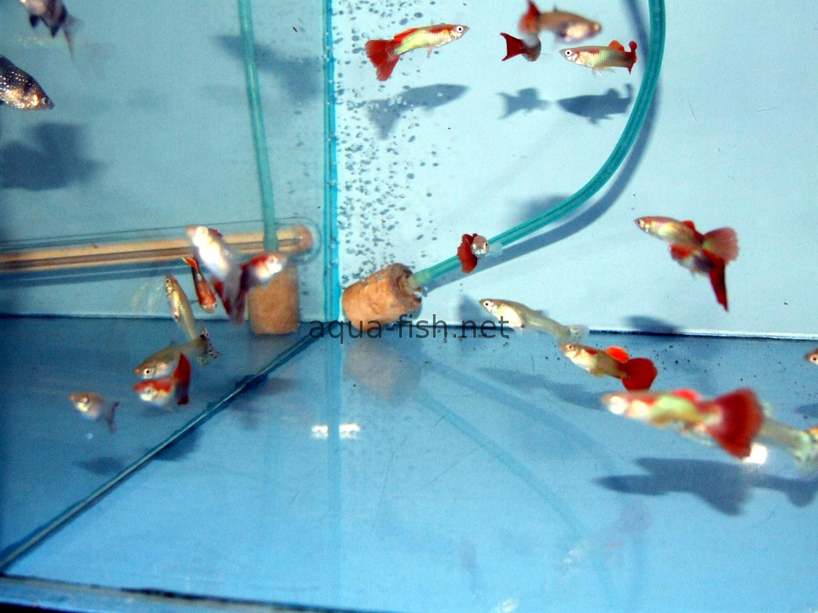 Guide Forum And Suppliers Of Aquarium Air Stones