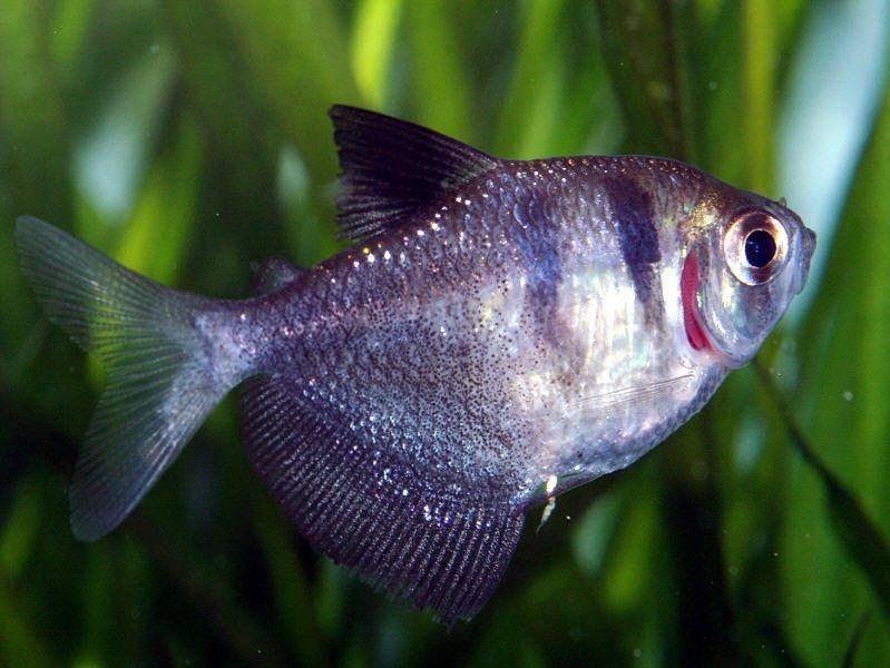 or sick tropical fish keeping aquarium fish
