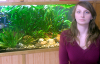 Your professional guide with aquarium plants - Susan